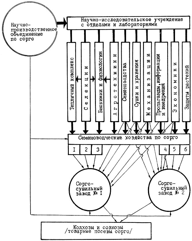 Рис. 11.  Схема научно-производственного объединения по семеноводству сорго.